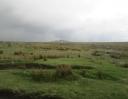 Dartmoorská blata